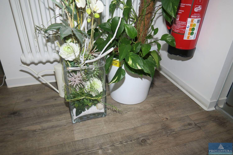 Zimmerpflanze i. Übertopf weiß